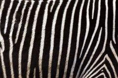 Zebra gestreifter Grunge Hintergrund Lizenzfreies Stockbild