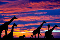 Zebra and giraffes resting in the sunset Royalty Free Stock Photography