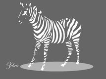 Zebra Stock Image