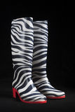 Zebra Gum Boots. Fashionable female zebra-style gum boots isolated with black background shot in studio, bought in Ukraine Stock Photos