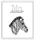 Zebra. Hand drawn sketch illustration Stock Photo