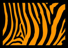 Zebra-Haut Stockbilder