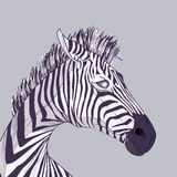 Zebra head royalty free stock photography