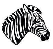 Zebra head Royalty Free Stock Photo
