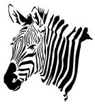 Zebra Head - Hippotigris Royalty Free Stock Image