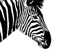 Zebra head illustrated Stock Image