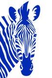 Zebra head. Vector. Zebra head in blue color. Vector illustration Royalty Free Stock Image