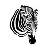 Zebra head on white background. Stock Image