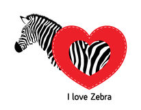 Zebra with heart. Stock Photos