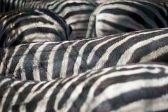 Zebra herd abstract background texture.  Stock Photography