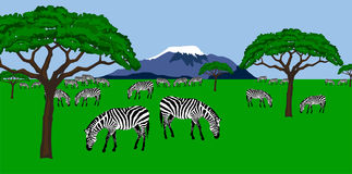 Zebra herd in african scenery vector illustration