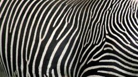 Zebra Hide Royalty Free Stock Photography