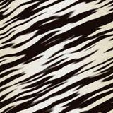 Zebra hide stock photography