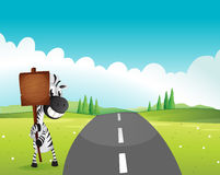 A zebra holding an empty wooden signboard along the road Royalty Free Stock Image