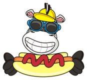 Zebra holding a hot dog Stock Photos