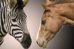 Zebra and horse Royalty Free Stock Images