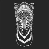 Zebra Horse Cool animal wearing native american indian headdress with feathers Boho chic style Hand drawn image for. Zebra Horse Hand drawn illustration for Royalty Free Stock Photography