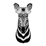 Zebra Horse pirate hat Cocked hat, tricorn Sailor, seaman, mariner, or seafarer Royalty Free Stock Photo