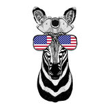 Zebra Horse pirate hat Cocked hat, tricorn Sailor, seaman, mariner, or seafarer. Wild animal wearing pirate cocket hat Stock Images