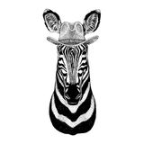 Zebra Horse Wild animal wearing cowboy hat Wild west animal Cowboy animal T-shirt, poster, banner, badge design. Wild animal wearing cowboy hat Wild west animal Royalty Free Stock Images