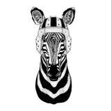 Zebra Horse Wild animal wearing rugby helmet Sport illustration Stock Photos