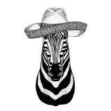 Zebra Horse Wild animal wearing sombrero Mexico Fiesta Mexican party illustration Wild west. Wild animal wearing sombrero Mexico Fiesta Mexican party Royalty Free Stock Image