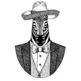 Zebra Horse Wild animal wearing Sombrero - traditional mexican hat Hand drawn illustration for tattoo, emblem, logo. Badge, patch, t-shirts Stock Photo