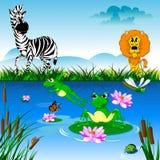 Zebra i lew Zdjęcia Stock