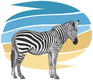 Zebra-Illustration Stockfoto