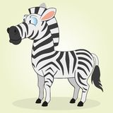Zebra Royalty Free Stock Photography