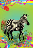Zebra. Illustration of zebra in colorful background Royalty Free Stock Image