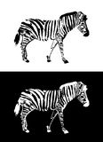 Zebra illustration vector Royalty Free Stock Photos