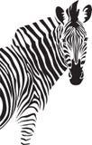 Zebra. Illustration. Zebra. Vector black and white illustration Royalty Free Stock Images