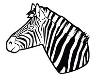 Zebra. Illustrator desain .eps 10 Royalty Free Stock Image