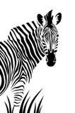 Zebra. Isolated on white background royalty free illustration