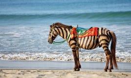 Zebra koń Zdjęcia Stock