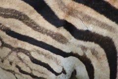 Zebra lampasa wzór Obraz Stock
