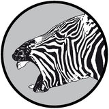 Zebra laughing Royalty Free Stock Image