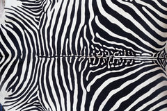Zebra leather skin texture painted Royalty Free Stock Photo