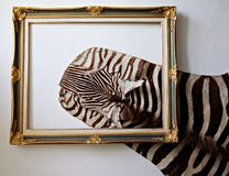 Zebra leather royalty free stock image