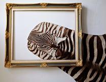 Zebra leather royalty free stock image