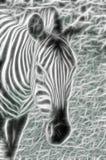 Zebra leggera Fotografia Stock