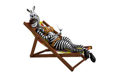 Zebra lies on a deck-chair Royalty Free Stock Photo