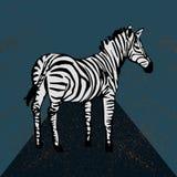 Zebra lokalisiert auf strukturiertem Hintergrund Lizenzfreie Stockfotos