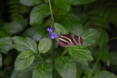 Beautiful butterfly on a flower in a garden royalty free stock image