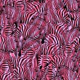 Zebra met abstracte roze achtergrond Royalty-vrije Stock Afbeelding