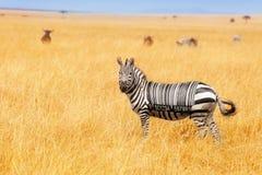 Zebra met streepjescode op het achterconcept op gebied stock foto's