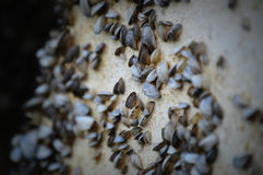 Zebra Mussels on a Pier Royalty Free Stock Photos