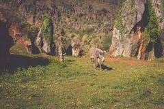 Zebra na obszarze trawiastym w Afryka, park narodowy Kenja Zdjęcie Stock