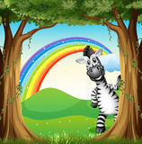 A zebra near the trees and a rainbow in the sky Royalty Free Stock Photo